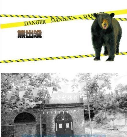 熊出没 河南一动物园饲养员被熊咬死