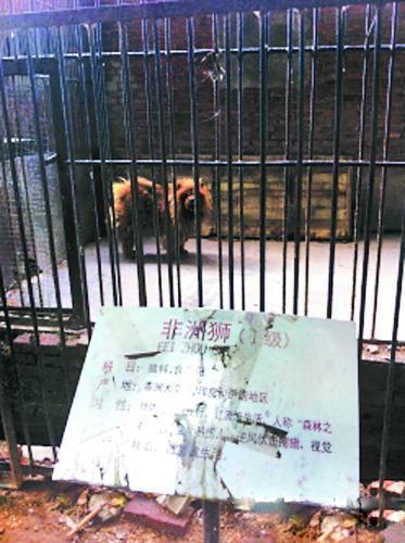 漯河市动物园相关工作人员作出解释