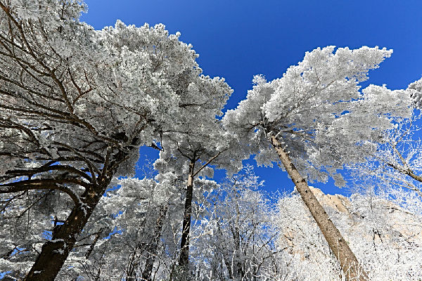 用拟物写冬天的风景
