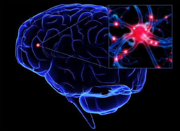 人类的大脑容量相对于其他动物都要大.