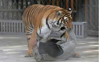 两只老虎土琵琶
