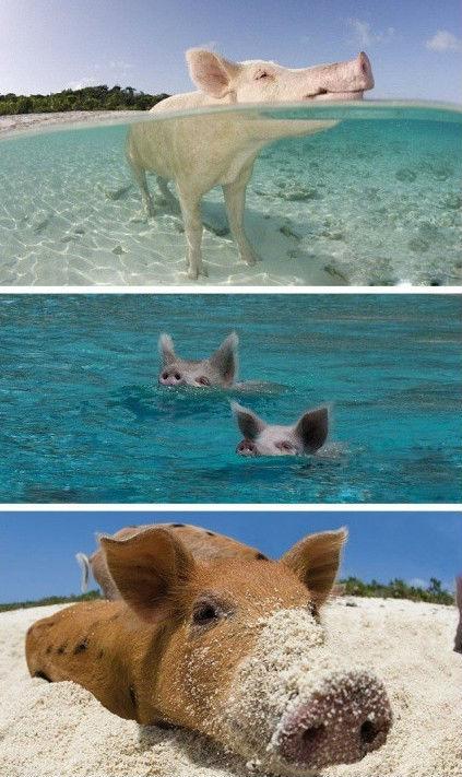 巴哈马群岛是西印度群岛的三个群岛之一,虽然它被认为加勒比海